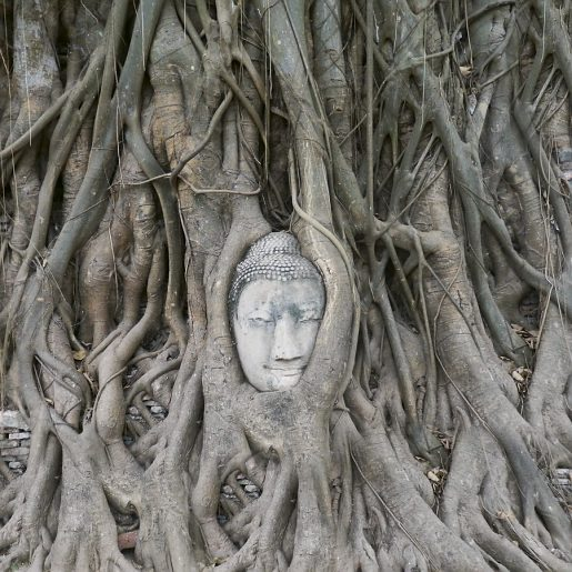 Buddhism is taking roots