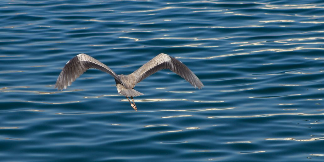 Flight above the sea
