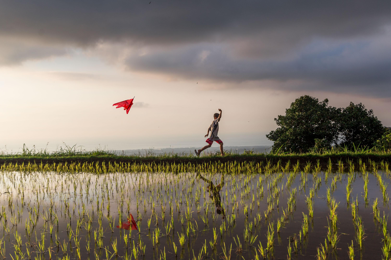 Ce jeune garçon s'amuse avec son cerf-volant dans les rizières (Sekumpul, Bali, Indonésie)
