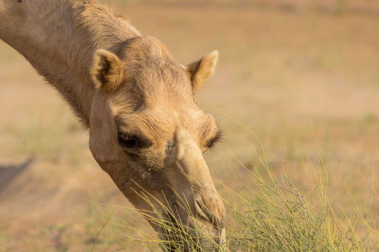 Desert reisdent