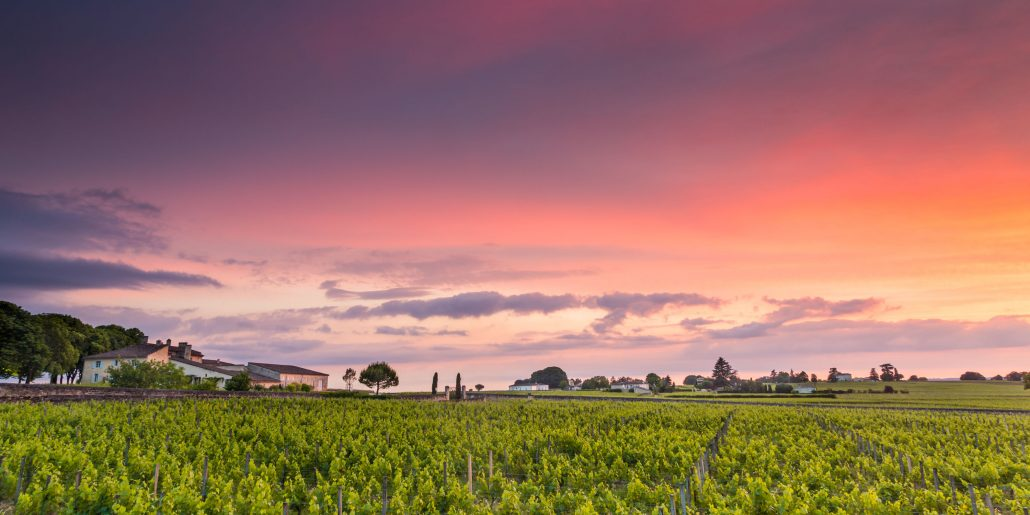 Vineyards sunset 2