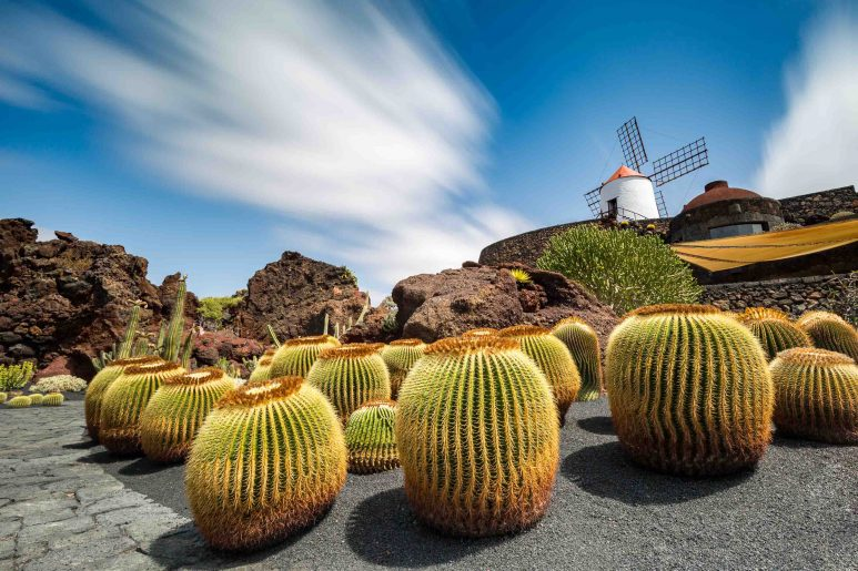 Moulin & Cactus