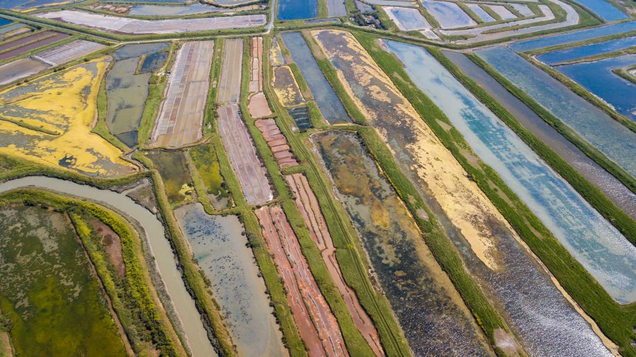 Colorful salt marshes 3