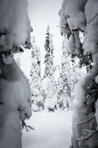 Under the snow II