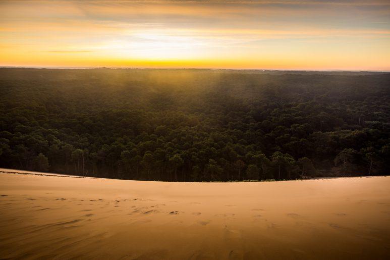 Dune sunshine