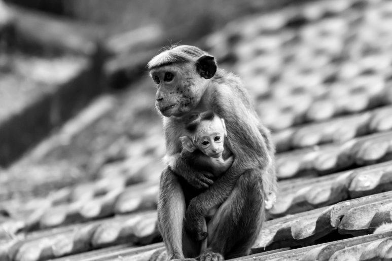 Mother hug