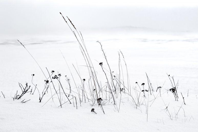 Winter vegetal